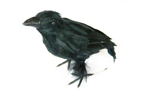 Krähe Rabe Hexe Halloween Dekoration