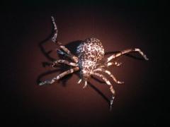 Spinne Riesentigerspinne Halloween Party Horror Deko