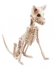Skelett Tierskelett Hundeskelett Halloweendekoration Halloweenfigur