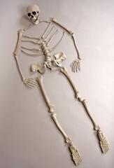 Skelett Skelettteile Skelettknochen Halloween Halloweendekoration