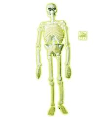 Knochengerüst Skelett Halloween Deko fluoreszierend groß