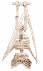Skelett Gerippe Knochengerüst Fledermaus Halloweendekoration Panelize®